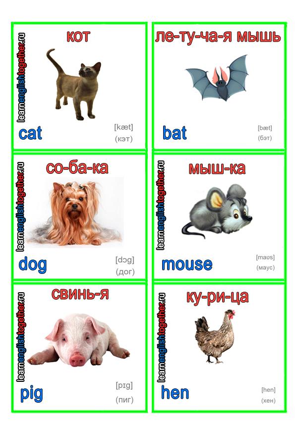 картинки для изучения английского языка