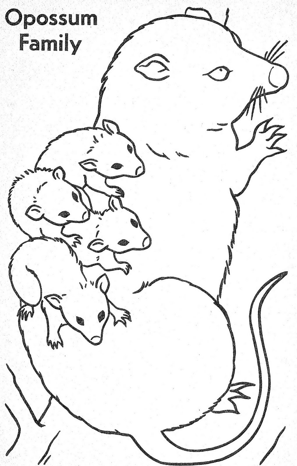 Forest Babies to Color_0027